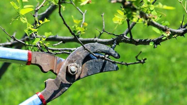Повышение урожайности деревьев