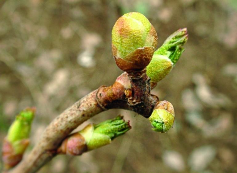 В каком месяце как правильно посадить смородину осенью
