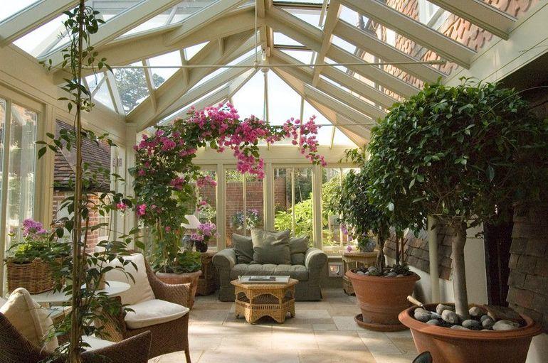 Зимние растения и цветы для дома