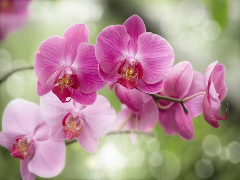 Очаровательная тропическая орхидея