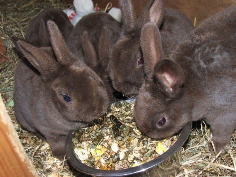Кормление кролей зимой