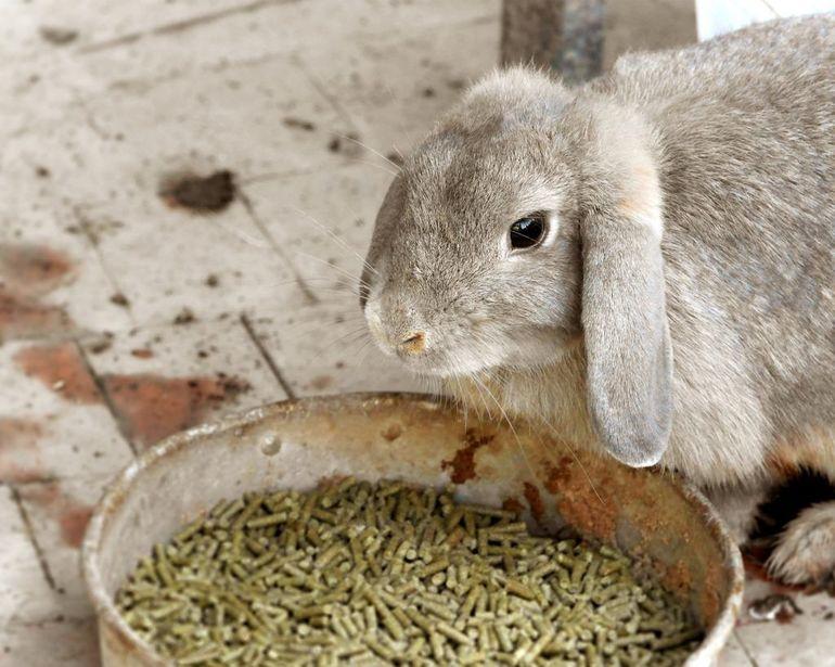 Специфика рациона кролика