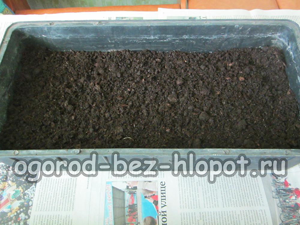 Насыпаем в емкость почву