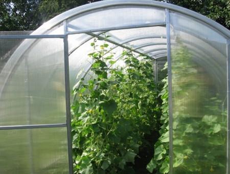 высажитьва помидоры в теплицу
