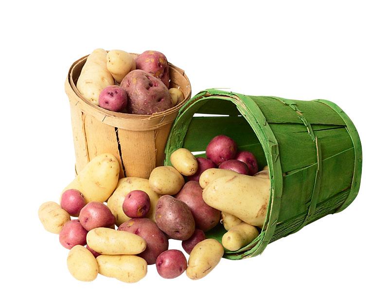 картофель на посадку