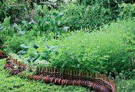пряные травы, выращивание на даче