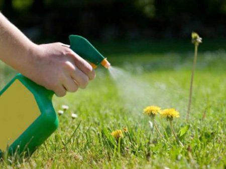 гербициды для борьбы с одуванчиками