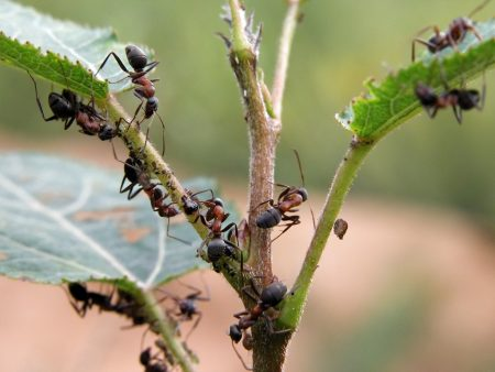 муравьи на деревьях