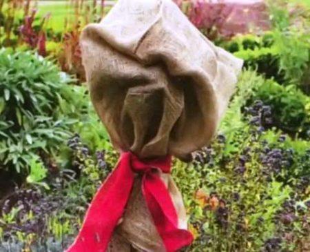 укрытие штамбовых роз