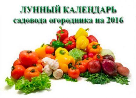 Посадочный календарь на 2020 год для огородников