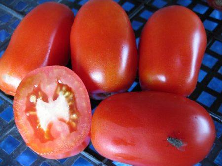 сорта томатов сибирской селекции