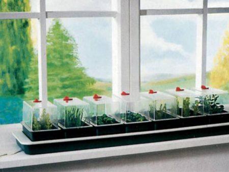 Огород на подоконнике зимой для начинающих