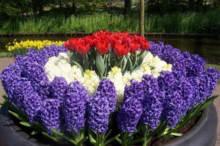 многолетние цветы для дачи не требующие ухода