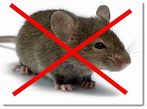 как действует ультразвуковой отпугиватель от мышей