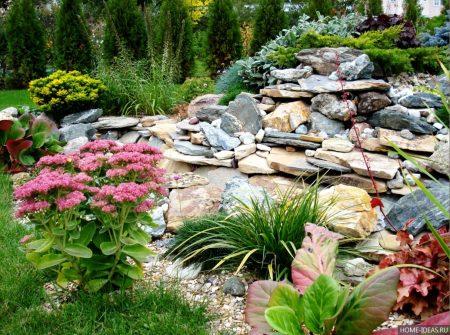 Растения для альпийской горки. фото и названия