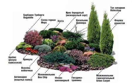 выбор растений для альпийской горки