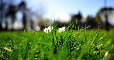 газон без сорняков