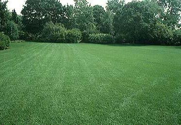 ровный газон без сорняков