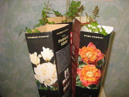 сохранение саженцев роз до марта