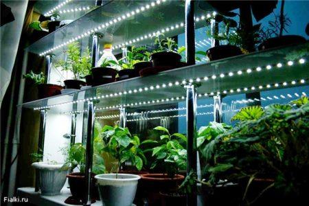 Освещение для рассады в домашних условиях