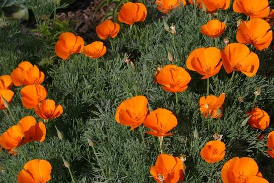 Однолетние цветы с названием