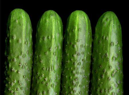 Огурцы для теплицы из поликарбоната