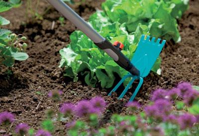 Огород мечты: не копать, не полоть и не поливать