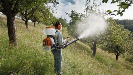 Когда опрыскивать деревья и кустарники весной от вредителей