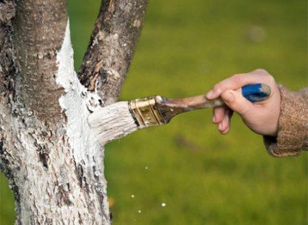 обработка деревьев от вредителей