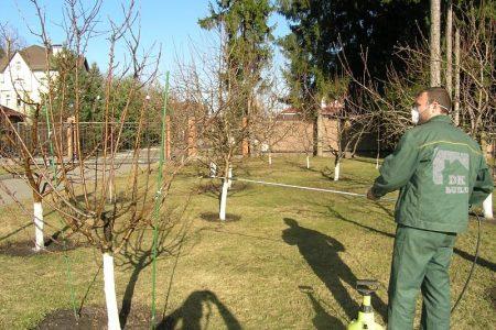 опрыскивание сада от вредителей