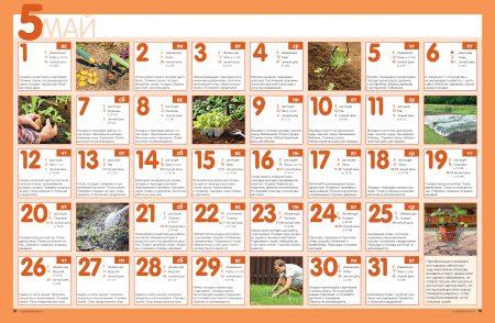 Посадка огурцов на рассаду в 2016 году по Лунному календарю даты