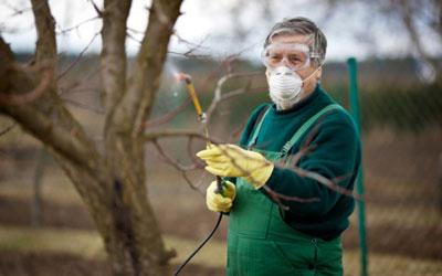 Чем обработать плодовые деревья ранней весной от вредителей