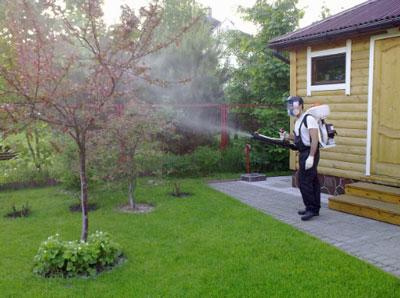 Чем обработать деревья и кусты в саду весной от вредителей