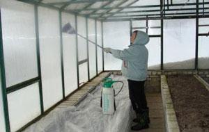 Чем обработать теплицу весной от вредителей и болезней