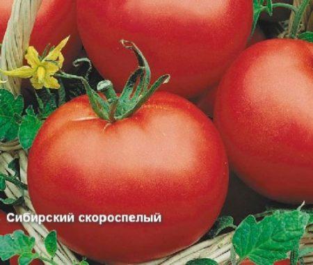 Томат «Сибирский скороспелый»: характеристика и описание сорта