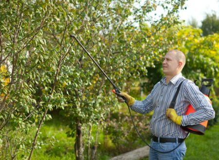 Чем обработать деревья и кусты в саду весной