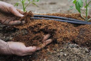 Какие удобрения вносить при посадке помидор