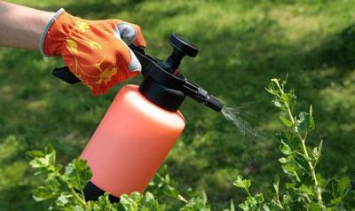 Луковая шелуха для огорода или сада, применение