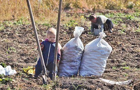 Как правильно посадить картошку, чтобы был урожай