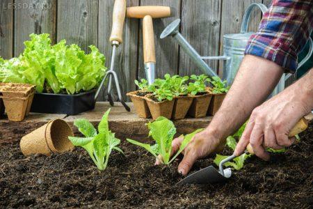 Лунный календарь на июль садовода и огородника