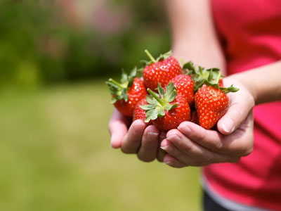 Клубника: уход весной, советы бывалых садоводов