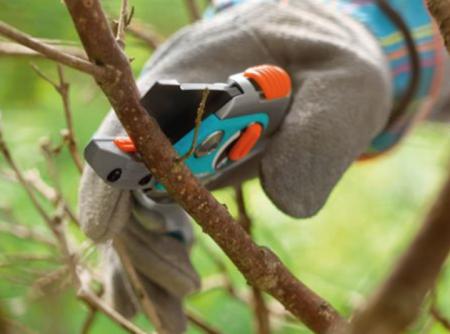 советы бывалых огородников по ухода за малиной весной