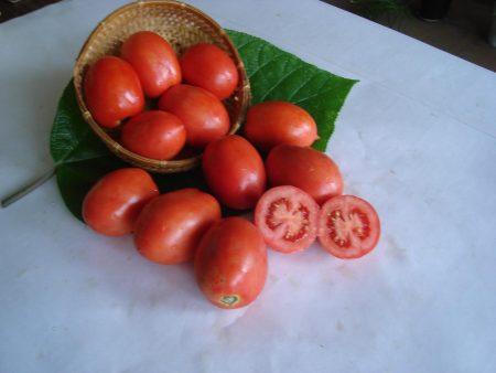 томат челнок описание
