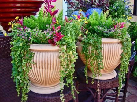 цветы в вазонах на даче