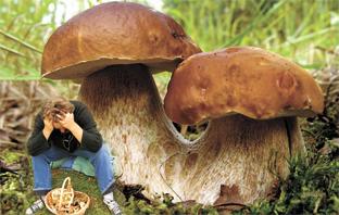 Куда поехать за грибами в Подмосковье 2021