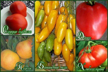 kakie-semena-tomatov-luchshie-dlya-teplic