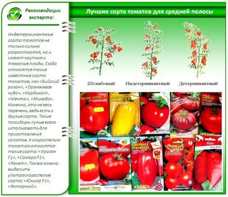 kakie-semena-tomatov-samye-luchshie-dlya-teplic