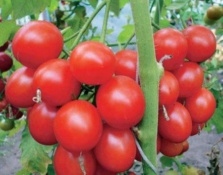 kakie-tomaty-samye-urozhai%cc%86nye-dlya-otkrytogo-grunta-otzyvy