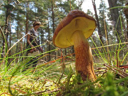 На машине за грибами: грибные места Подмосковья