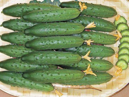 ogurcy-dlya-rostovskoi%cc%86-oblasti-semena-luchshie-sorta